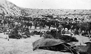 Australian 8th Light Horse at Romani